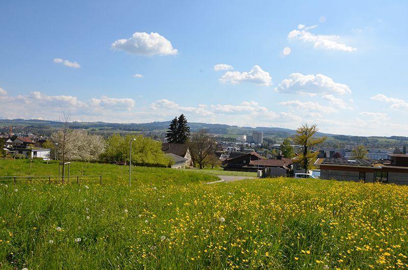 Bauland-Weinfelden-1